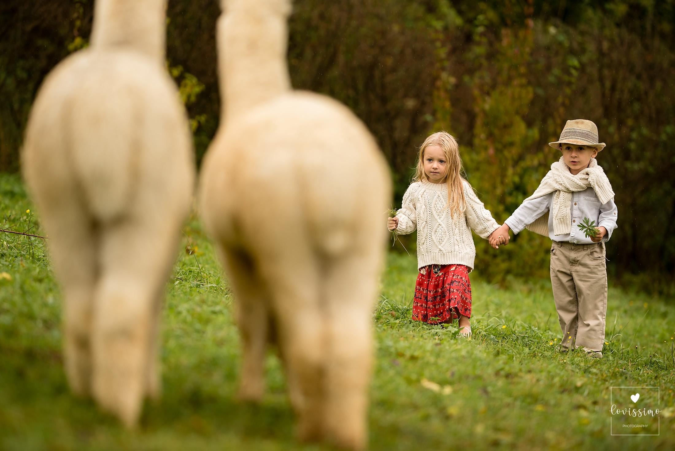 Sesja Dziecięca Z Alpakami W Okolicach Rzeszowa